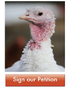 pardoned-turkeys